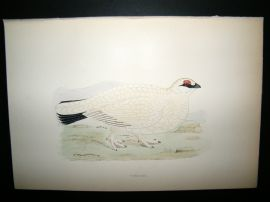 Morris 1870 Antique Hand Col Bird Print. Ptarmigan